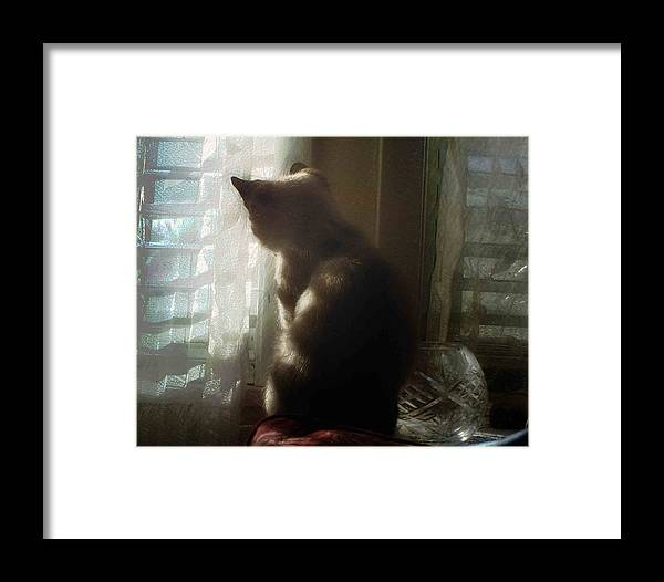 Cat Framed Print featuring the photograph Gazing by Ken Gimmi