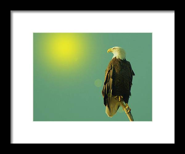 Eagles Framed Print featuring the photograph Gazing Sunward by Jeff Swan