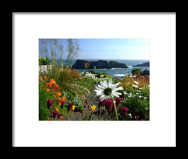 Daisy Framed Print featuring the photograph Gazing Toward The Sea by Donna Blackhall