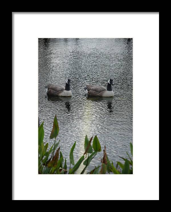 Water Framed Print featuring the photograph Geese by Rob Hans
