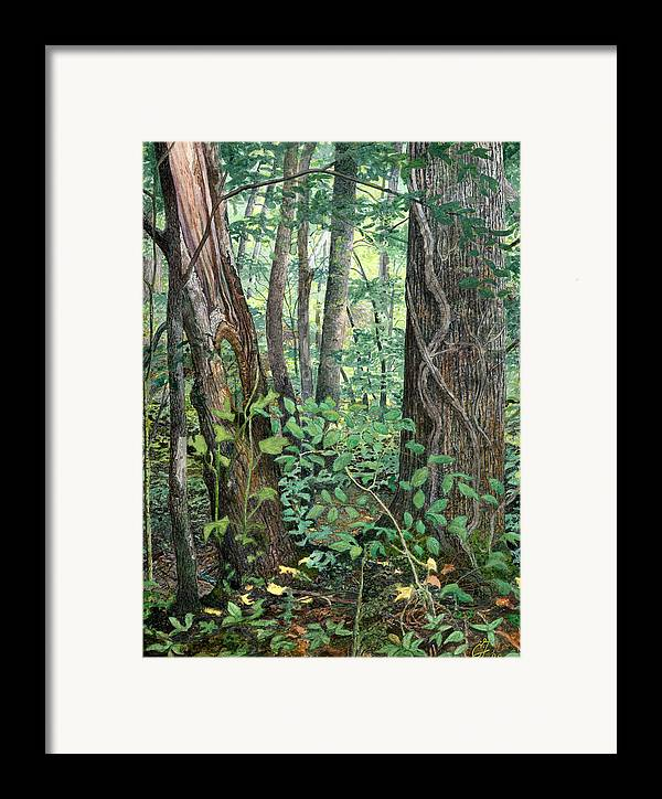 Forest Framed Print featuring the painting Generations by Craig Gallaway