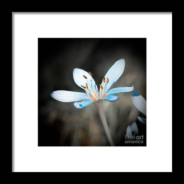 Flower Framed Print featuring the photograph Gentle by Gabriela Insuratelu