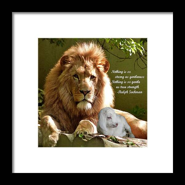 Photography Framed Print featuring the photograph Gentle Strength by L Lindall