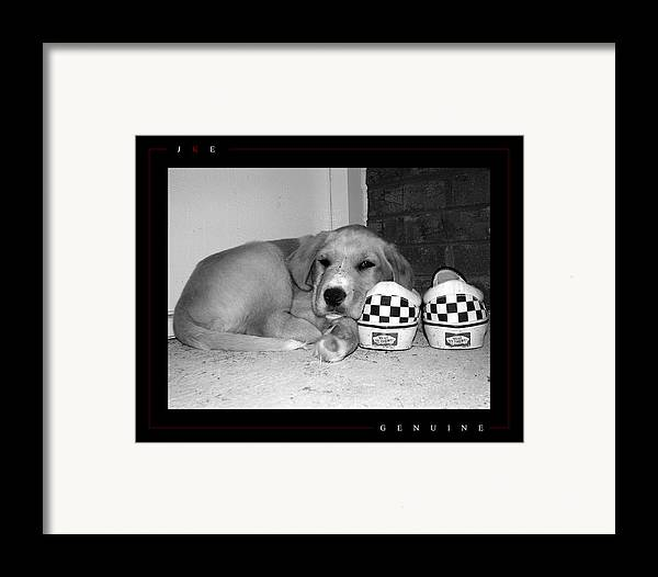 Puppy Framed Print featuring the photograph Genuine by Jonathan Ellis Keys