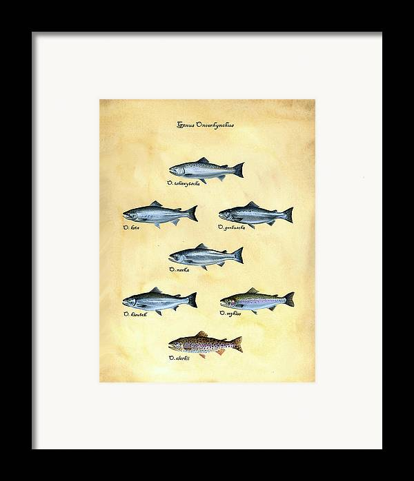 Salmon Framed Print featuring the painting Genus Oncorhynchus by Logan Parsons