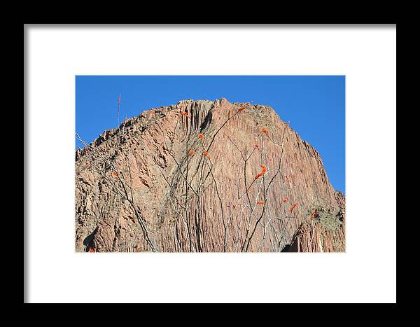 Ocatillo Framed Print featuring the photograph Geology Sans Cantus by Thor Sigstedt