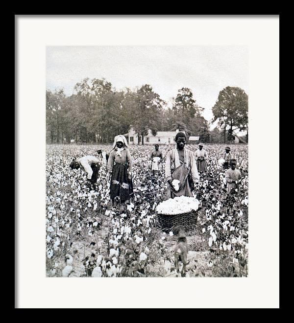 Cotton Picking Framed Art Prints Fine Art America