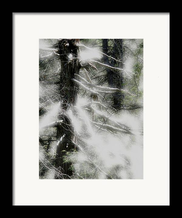Trees Framed Print featuring the digital art Georgia Pines by Donna Thomas