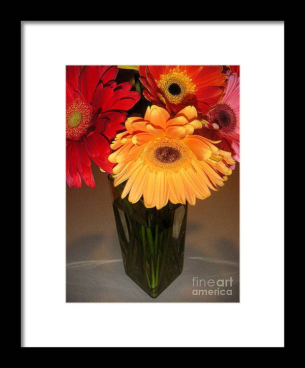 Nature Framed Print featuring the photograph Gerbera Daisies - Vased by Lucyna A M Green