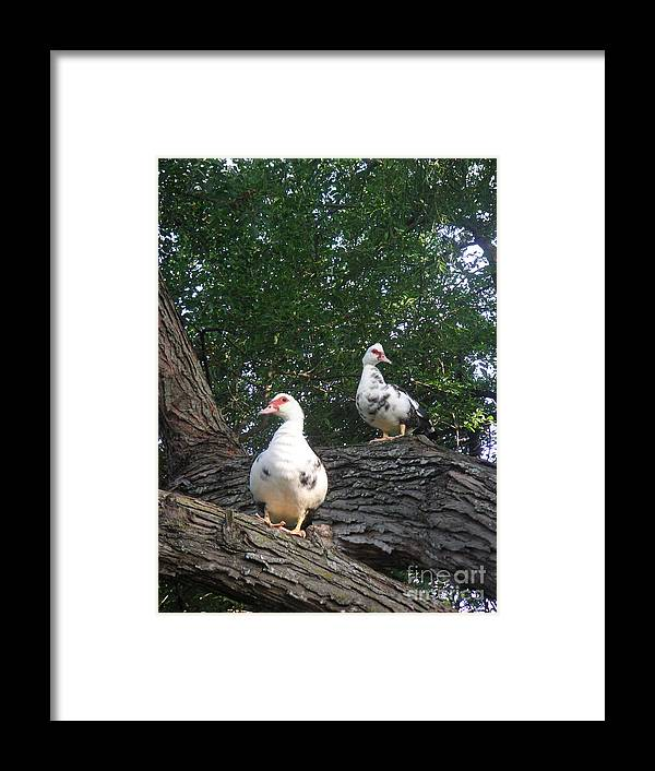 Nature Framed Print featuring the photograph Getting A Better View by Lucyna A M Green