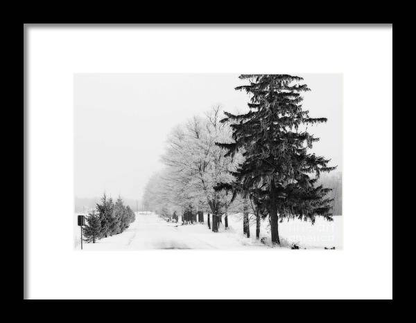 Trees Framed Print featuring the photograph Getting Bigger by Cathy Beharriell