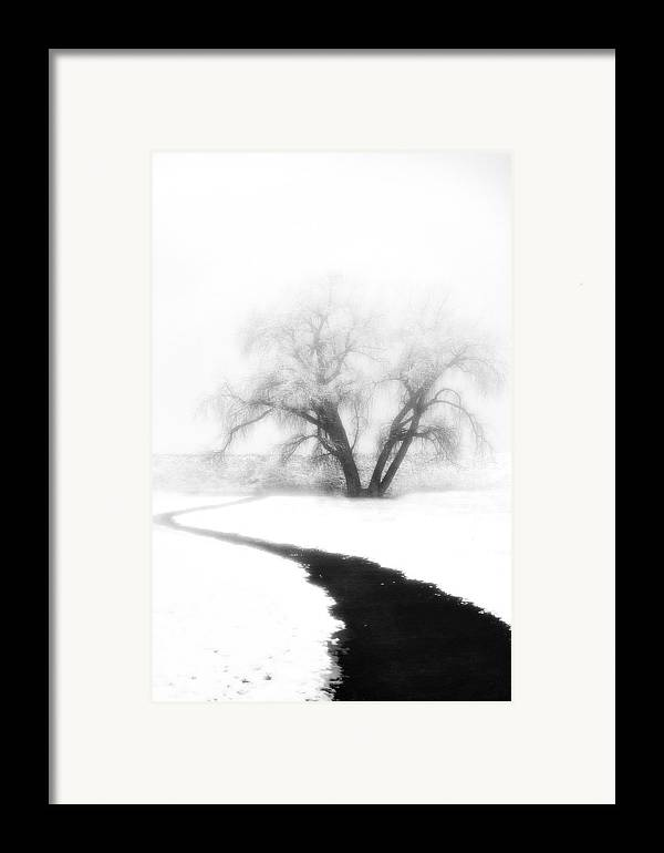 Tree Framed Print featuring the photograph Getting There by Marilyn Hunt
