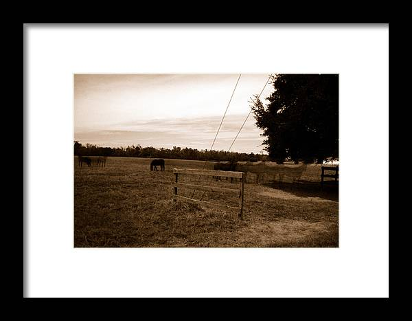 Horses Framed Print featuring the photograph Ghost Horses Of Huckleberry Lane by Heather S Huston