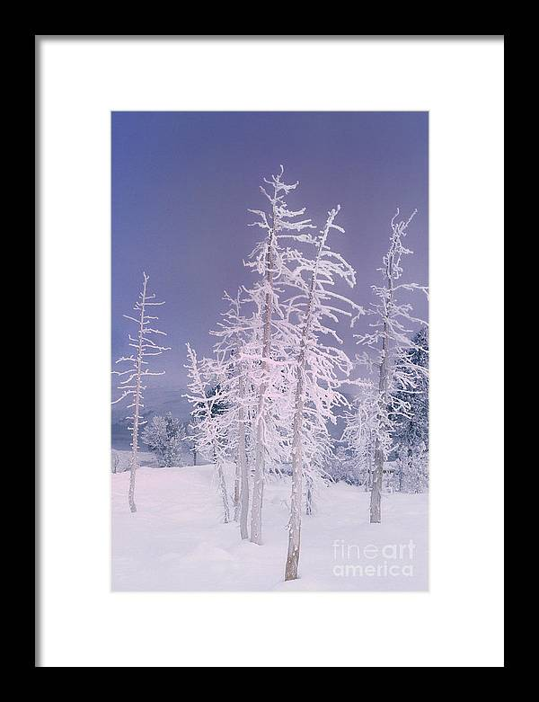 North America Framed Print featuring the photograph Ghost Trees Yellowstone National Park by Dave Welling