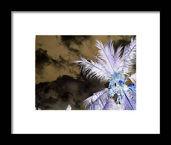 Inverted Scary Tropical Mysterious Coconut Trees Framed Print featuring the photograph Ghost Tropical by Okitha Dharmapriya
