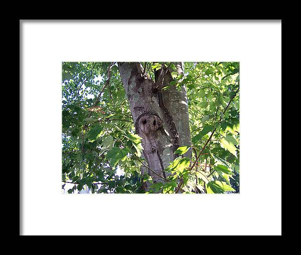 Tree Photography Framed Print featuring the photograph Ghostly Owl by Evelyn Patrick