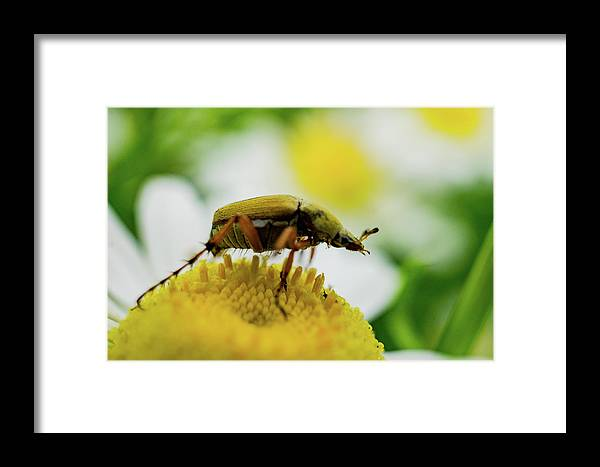 Insect Framed Print featuring the photograph Giant by John Gagnon