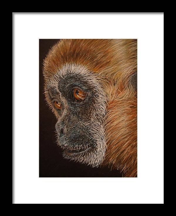 Animals Framed Print featuring the drawing Gibbon by Karen Ilari