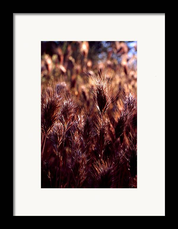 Nature Framed Print featuring the photograph Gideon by Randy Oberg