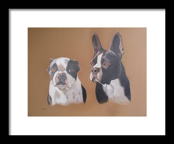 Two Boston Terriors Framed Print featuring the painting Gilbert And Ellis by Luci DIckinson