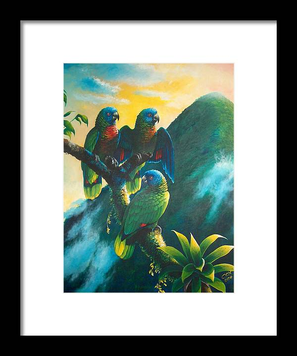 Chris Cox Framed Print featuring the painting Gimie Dawn 1 - St. Lucia Parrots by Christopher Cox