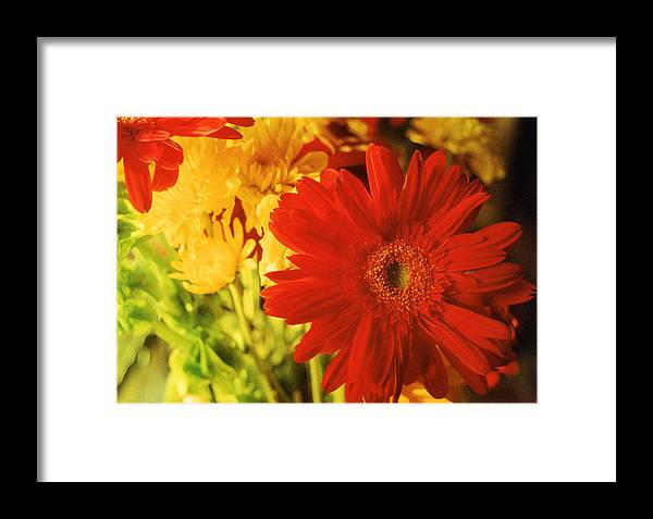 Floral Framed Print featuring the photograph Give It Your All by Jan Amiss Photography
