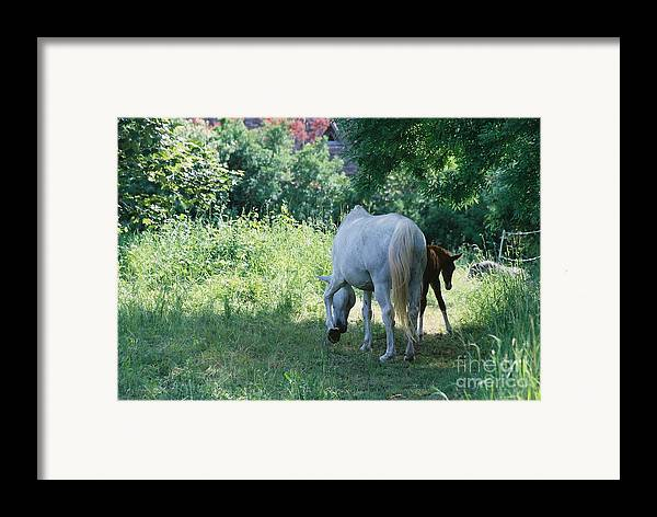 And Framed Print featuring the photograph Giverny Mare And Foal Landscape by Nadine Rippelmeyer