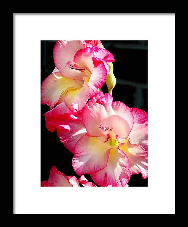 Flower Framed Print featuring the photograph Gladiolas by Tony Ramos