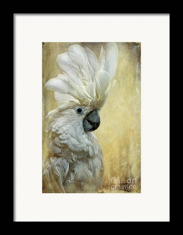 Cockatoo Framed Print featuring the photograph Glamour Girl by Lois Bryan