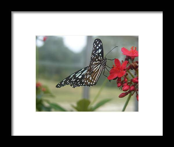 Butterfly Framed Print featuring the photograph Glass Wing Butterfly by James and Vickie Rankin