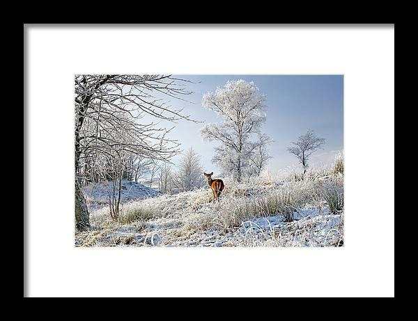Glen Shiel Framed Print featuring the photograph Glen Shiel Misty Winter Deer by Grant Glendinning