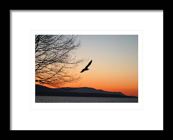 Seagull Framed Print featuring the photograph Glide by J D Banks