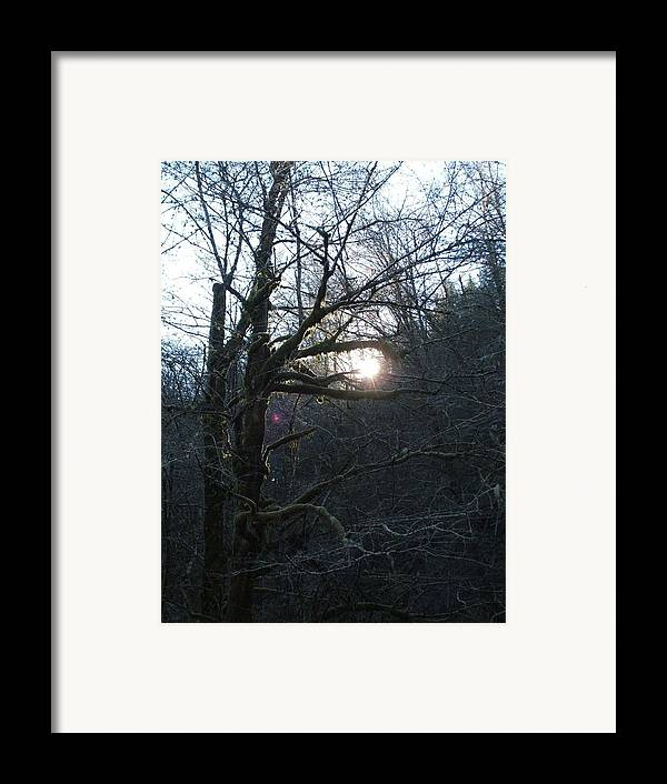 Forest Framed Print featuring the photograph Glimpse Of Hope by Shari Chavira