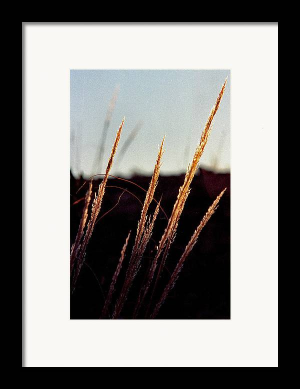 Grass Framed Print featuring the photograph Glistening Grass by Randy Oberg
