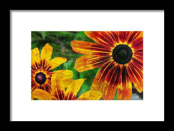 Flower Framed Print featuring the photograph Gloriosa Daisy by JAMART Photography