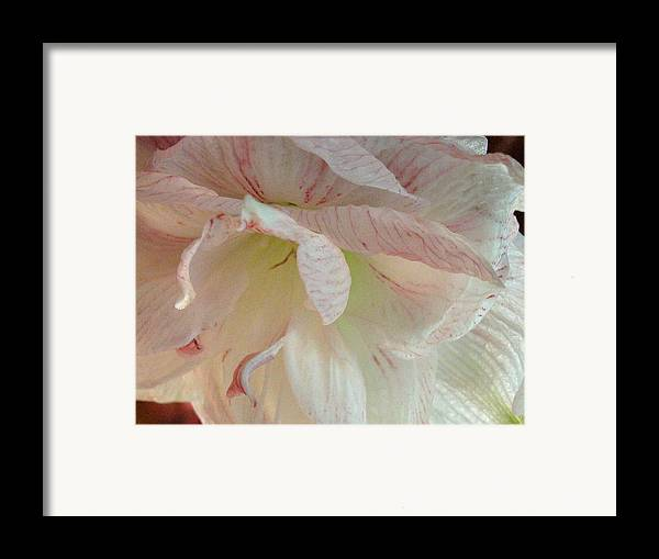 Amerylius Framed Print featuring the photograph Glorioso by Belinda Consten