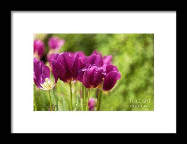 Tulips Framed Print featuring the photograph Glorious Days by Beve Brown-Clark Photography