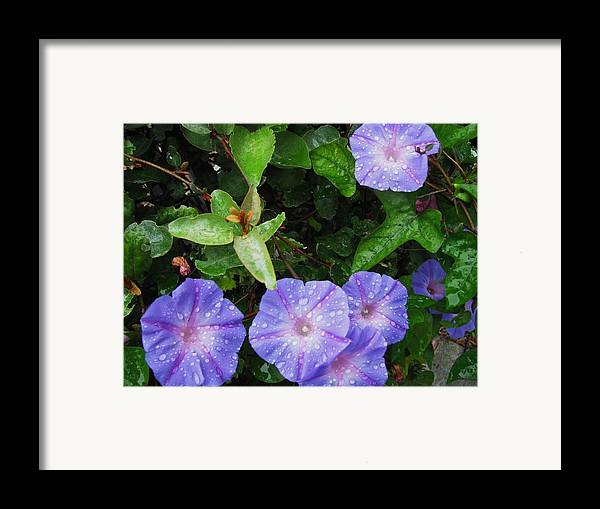 Flower Framed Print featuring the photograph Glorious Morning by Gloria Byler