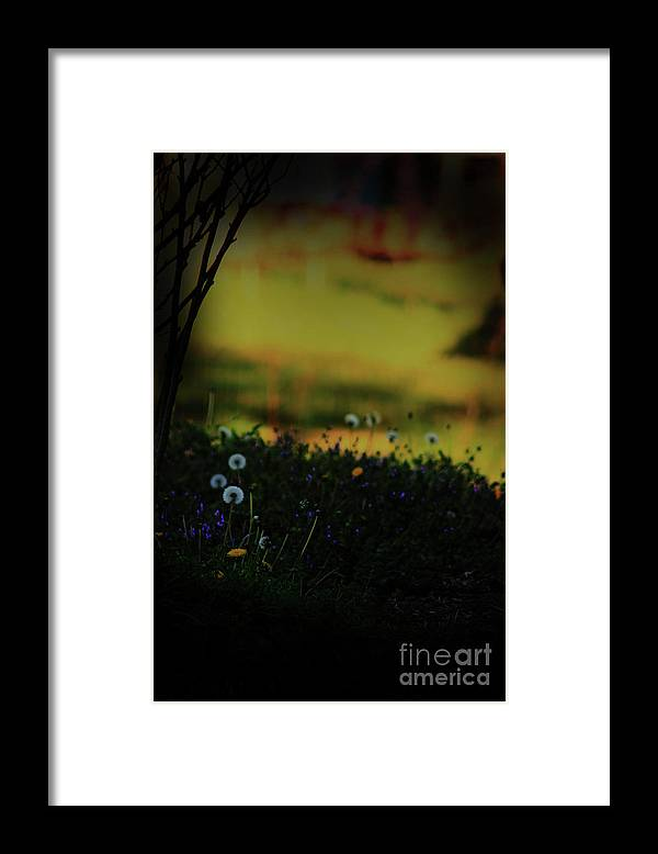 Nature Framed Print featuring the photograph Glowing by Kim Henderson