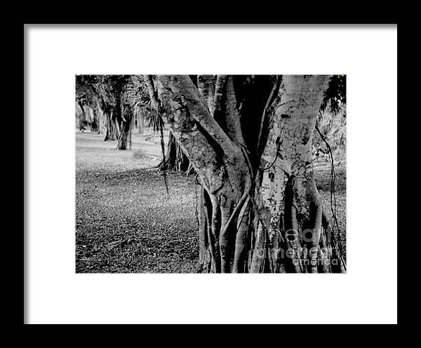 Tree Framed Print featuring the photograph Gnarly Nature by Vicki Lynn Sodora