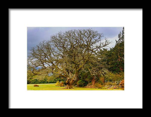Tree Framed Print featuring the photograph Gnarly Tree by Amy Sorvillo