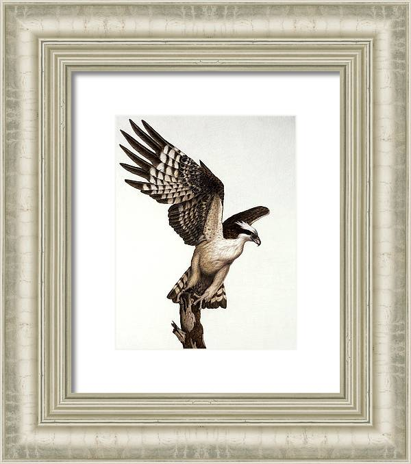 Going Fishin' osprey by Pat Erickson