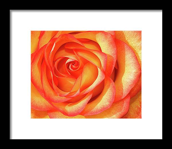 Beautiful Framed Print featuring the photograph Gold And Red by Dawn Currie