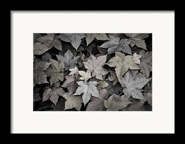 Beautiful Photos Framed Print featuring the photograph Gold Copper And Silver Leaves 1 by Roger Snyder