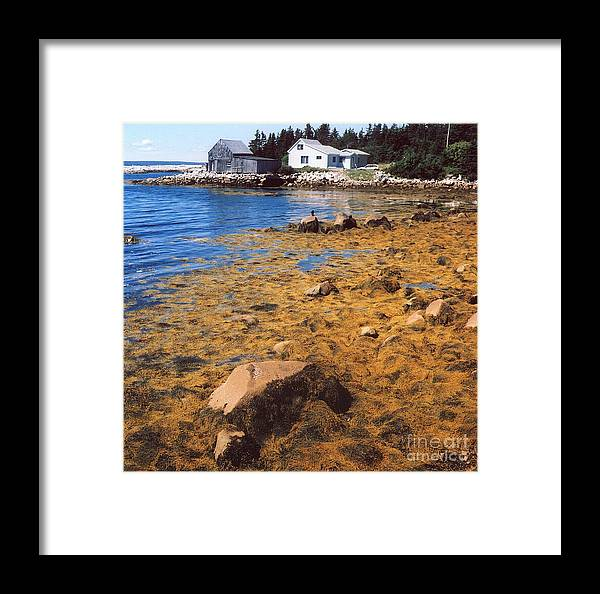 Shack Framed Print featuring the photograph Golden by Andrea Simon
