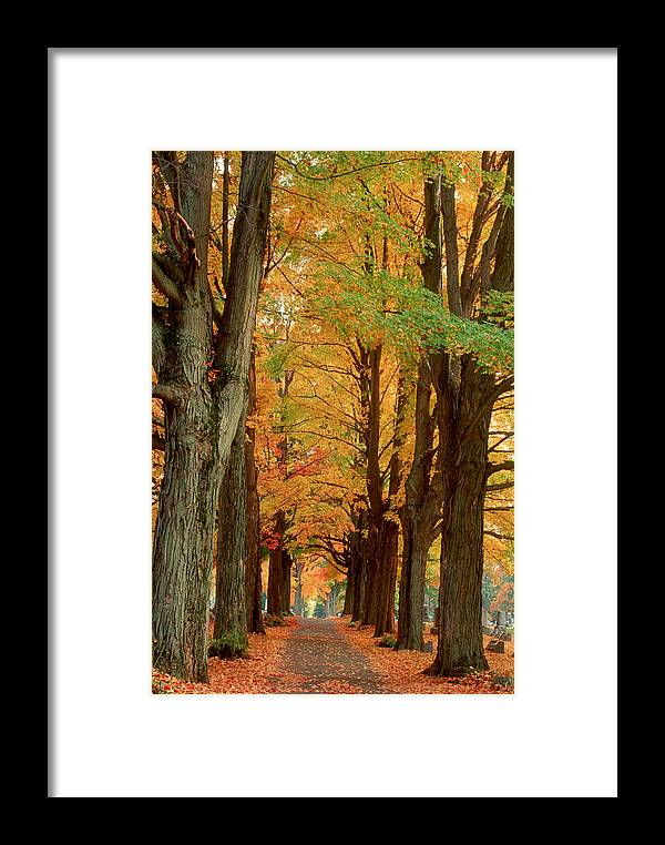 Fall Framed Print featuring the photograph Golden Avenue by Raju Alagawadi