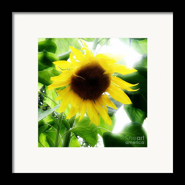 Sunflower Framed Print featuring the photograph Golden Beauty by Idaho Scenic Images Linda Lantzy