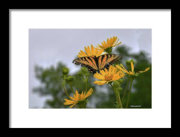 Butterfly Framed Print featuring the photograph Golden Boy by Reese Lewis