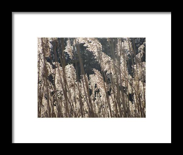 Golden Brown Grass Photographs Canvas Prints Reeds Nuetral Colors Landscape Winter Wetland Images Winter Marsh Photo Prints Maryland Cheasapeake Tributary Framed Print featuring the photograph Golden Brown by Joshua Bales