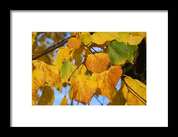 Autumn Framed Print featuring the photograph Golden by Carol Lynch